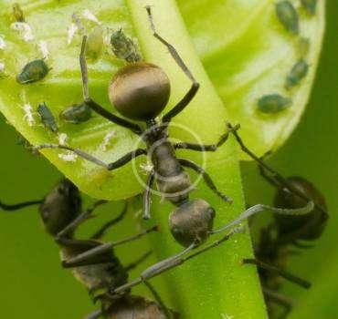 Pest-control management